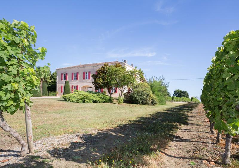 Chateau-Le-Camplat-vignes